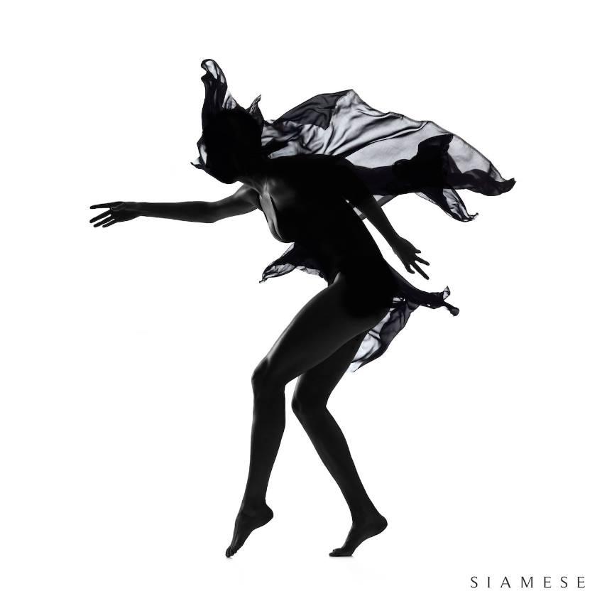 Siamese – Siamese